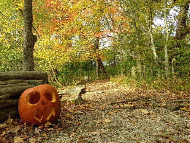 spooky-2015