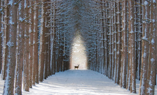 Photo-1_Magical-winter-in-Quebec-forest-Canada_Gilles-Chênevert-695x420