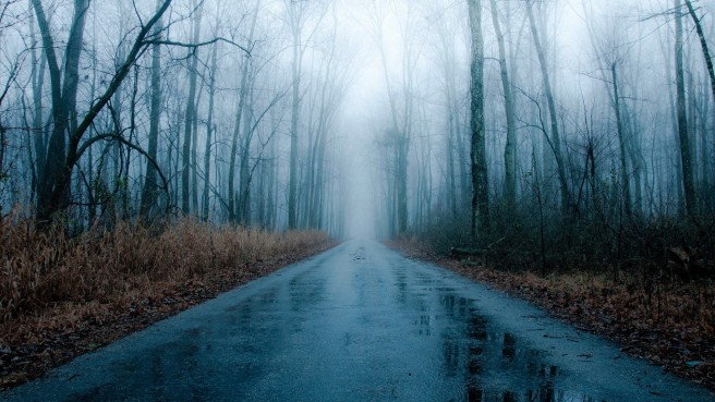 Foggy Rainy Road Bare Forest Winter Fog Rain Wallpaper HD 1920x1080