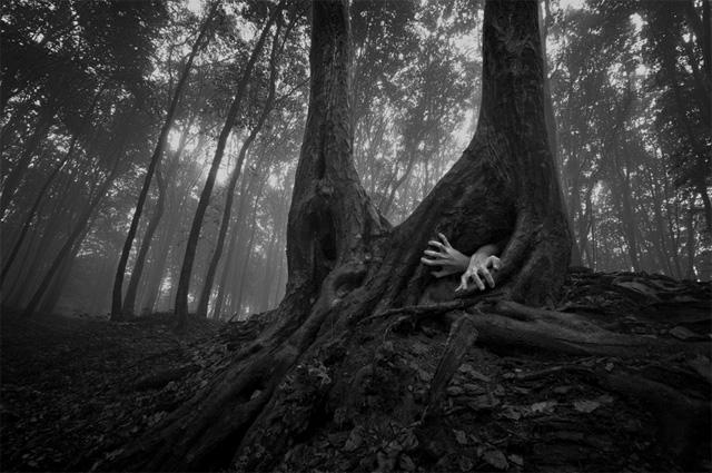 tree-41